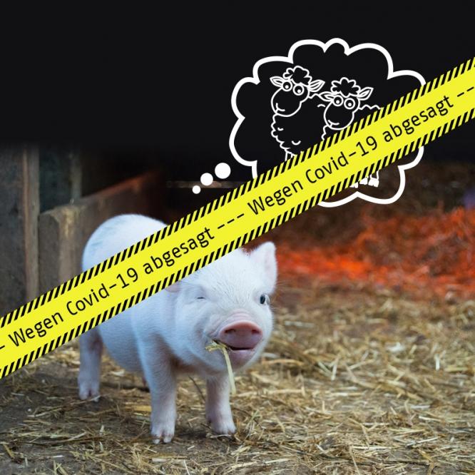 VERANSTALTUNG ABGESAGT: Schweinchen BABE